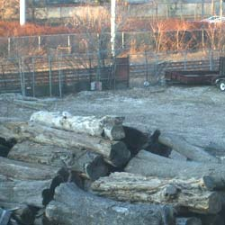 Log yard outside of Metro Hardwoods on Train Avenue